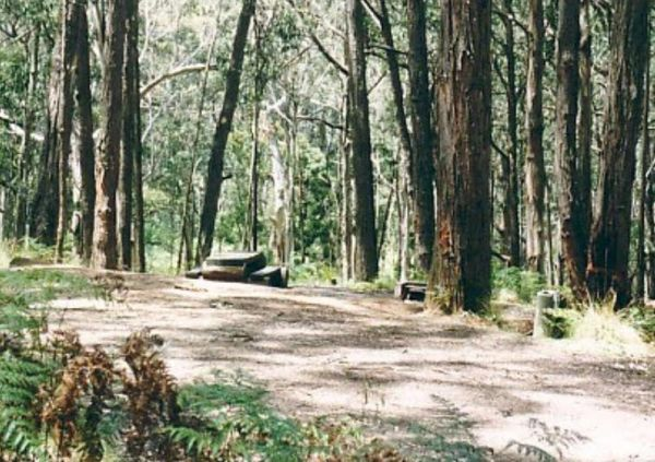 Ferntree Camping Ground