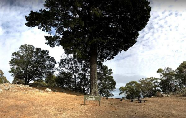 Mount Beckworth Scenic Reserve - Manna Gums - Camping Area