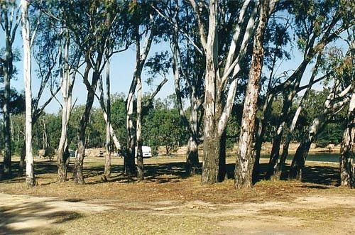Bourkes Bend State Forest Camping Area