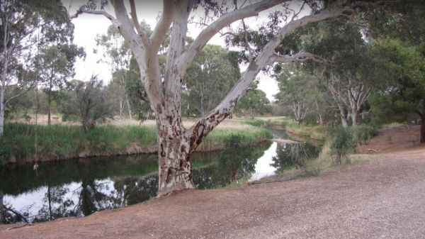 Whitecliff Reserve Camping Area