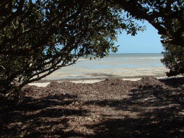 Bush Bay Camping Area