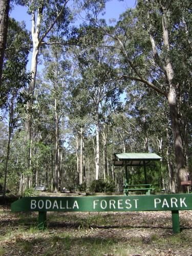 Bodalla Forest Park Rest Area