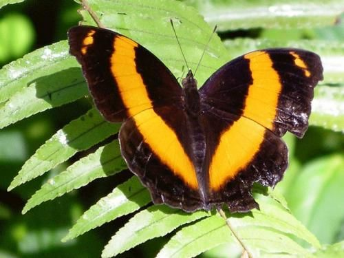 Batchelor Butterfly Farm And Tropical Retreat