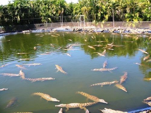 Knuckey Lagoon - Crocodylus Park