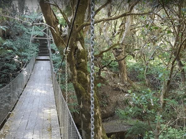 McKenzie River Rainforest Walk