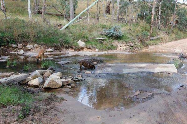 Blue Range Creek Camping Area