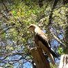 Eagles Heritage Raptor Wildlife Centre